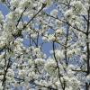 Der Neue Frühling